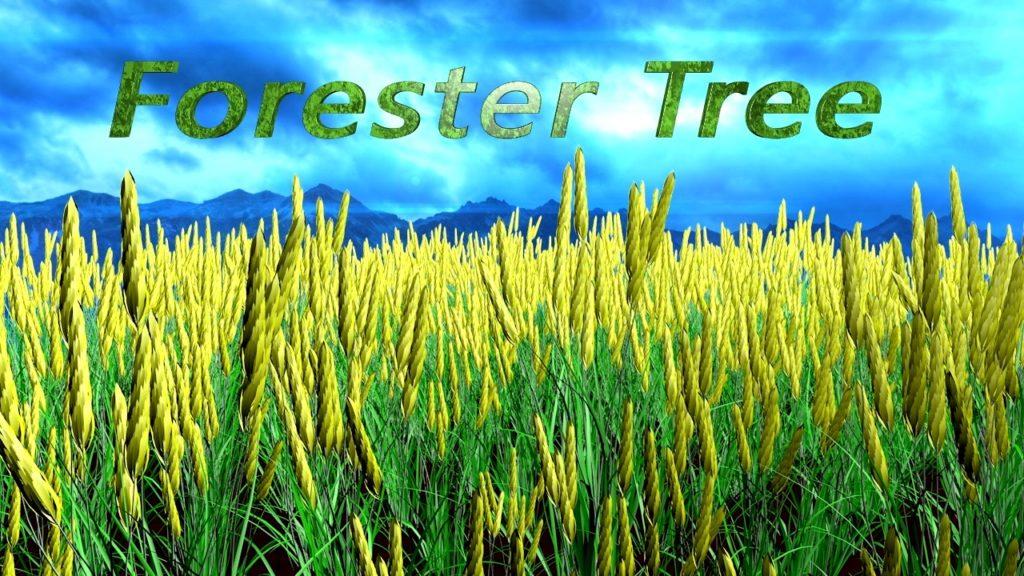 Плагин деревьев Forester Tree для Cinema 4D