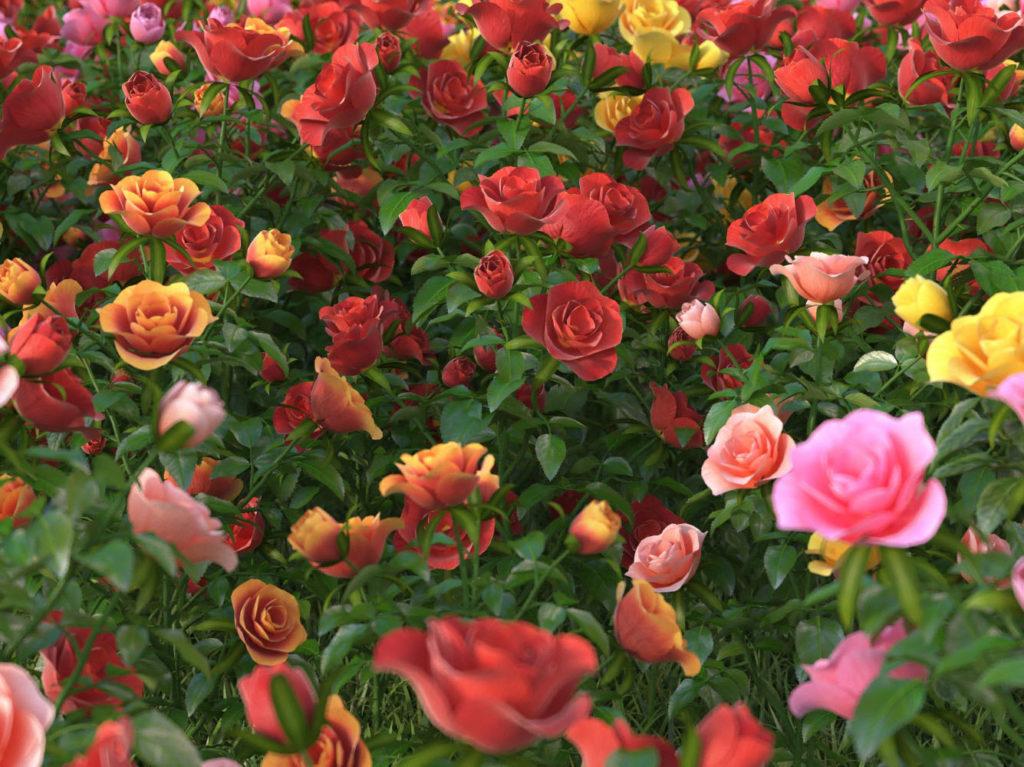 Красивые 3D модели цветы розы