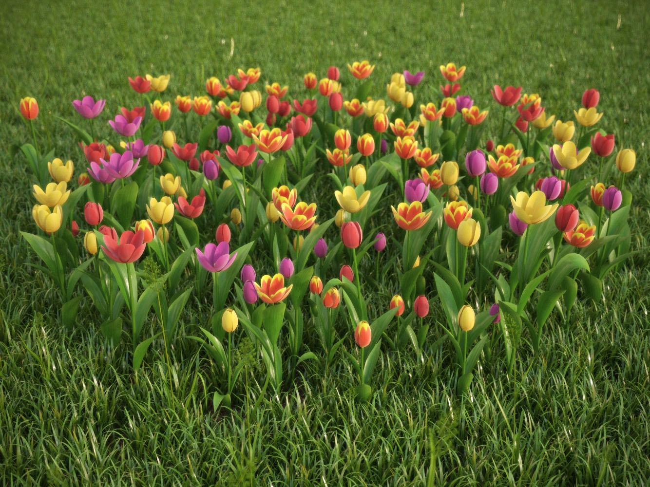 Красивые 3D модели тюльпанов и виолы