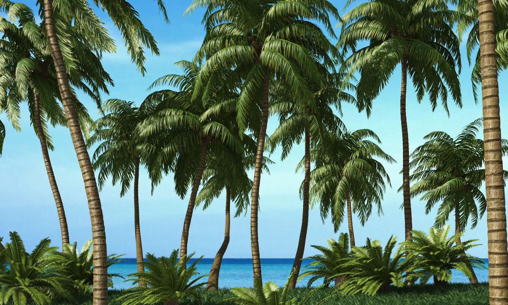 Красивые 3D модели деревьев пальмы